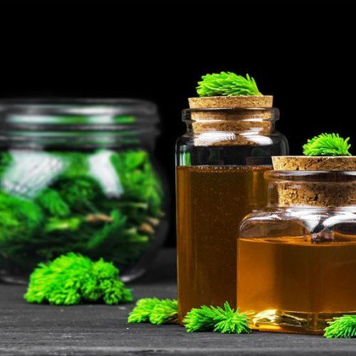 Syrop z sosny – Przepis, jak zrobić? Na co pomaga?