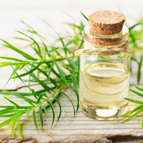 Olej z drzewa herbacianego – Jakie ma właściwości i zastosowanie?