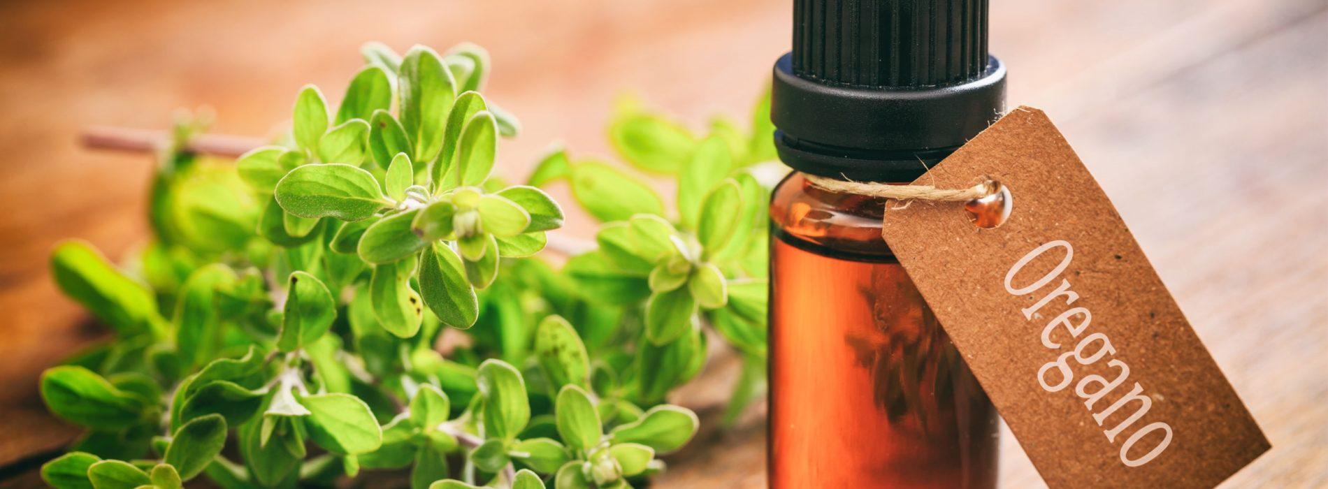 Olej z dzikiego oregano – Właściwości i zastosowanie