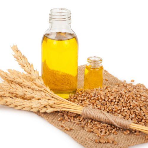 Olej z kiełków pszenicy – Jakie ma właściwości i zastosowanie?