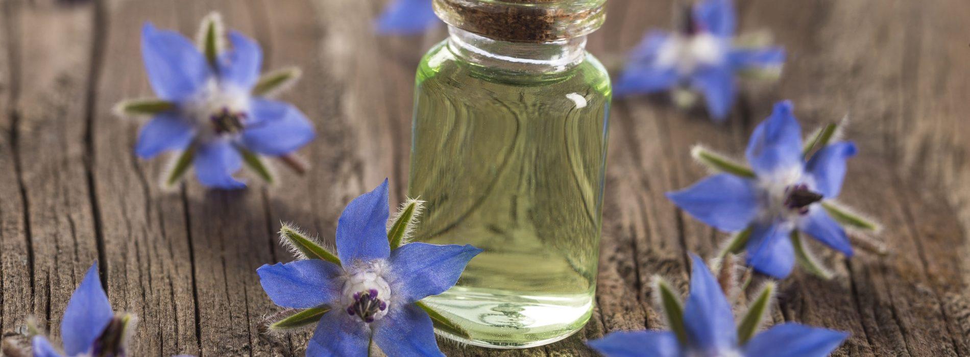 Olej z nasion ogórecznika lekarskiego – Właściwości i zastosowanie