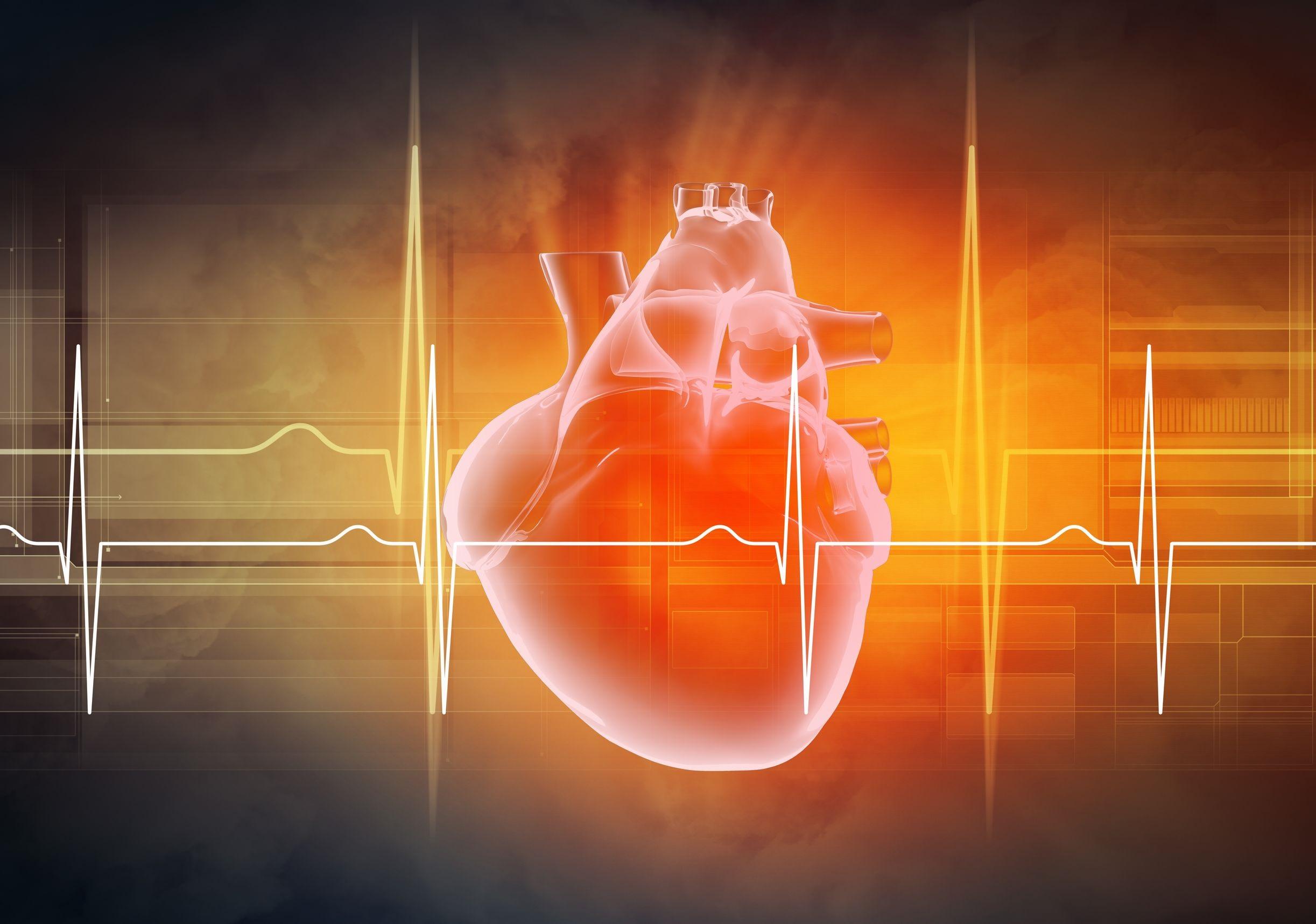 układ sercowy