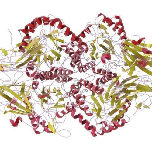 Mukopolisacharydozy – Co to jest i jak leczyć?